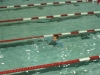 swim_night_2014_005