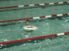swim_night_2014_006